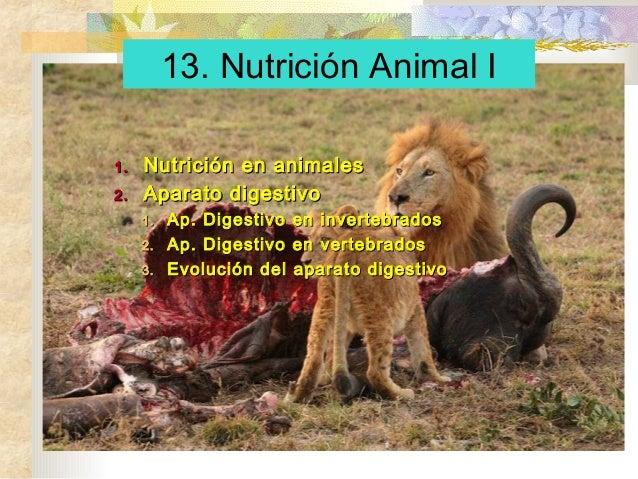 1.1. Nutrición en animalesNutrición en animales 2.2. Aparato digestivoAparato digestivo 1.1. Ap. Digestivo en invertebrado...