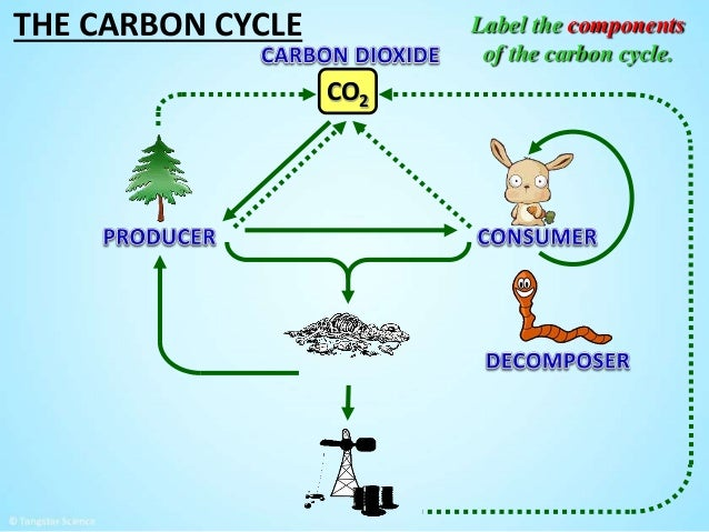 How does carbon dating help scientists and what are some of the drawbacks
