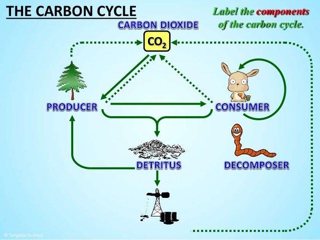 The carbon cycle by tangstar science 12 the carbon cycle co2 label ccuart Choice Image