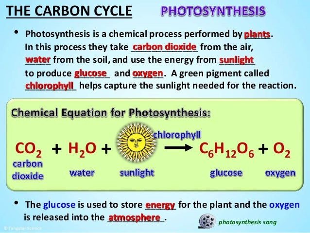 carbon phosphorus and nitrogen cycles essay help
