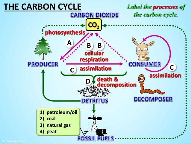 The carbon cycle by tangstar science 28 the carbon cycle co2 label ccuart Choice Image