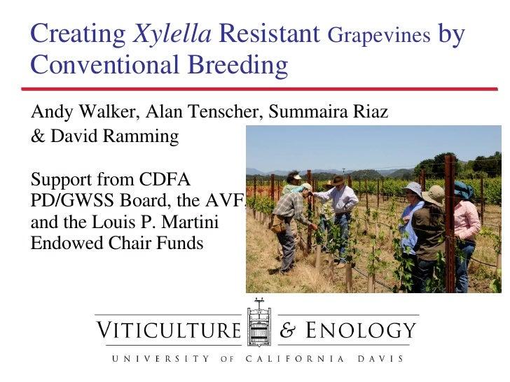 Creating  Xylella  Resistant  Grapevines  by Conventional Breeding <ul><li>Andy Walker, Alan Tenscher, Summaira Riaz </li>...