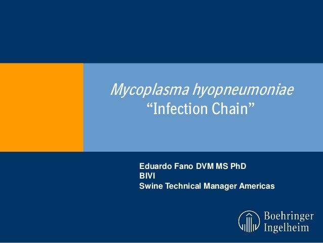 "Mycoplasma hyopneumoniae ""Infection Chain""  Eduardo Fano DVM MS PhD BIVI Swine Technical Manager Americas"