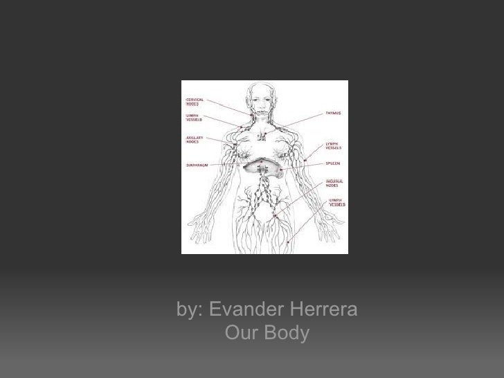 by: Evander Herrera     Our Body