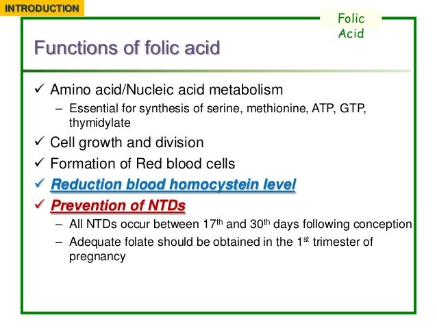 What Foods Have Folic Acid