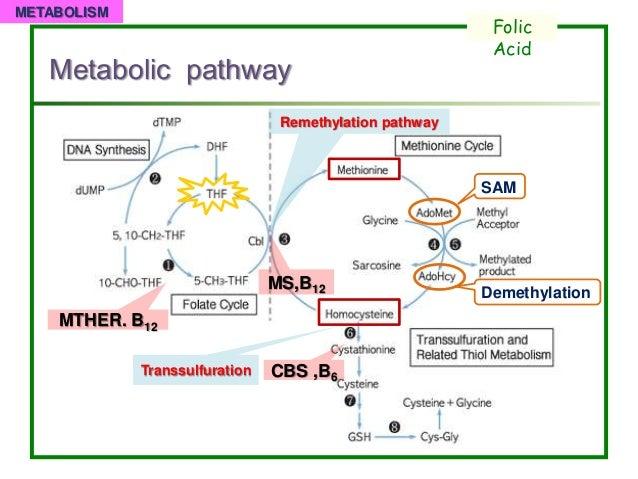 steroidogenesis tissues