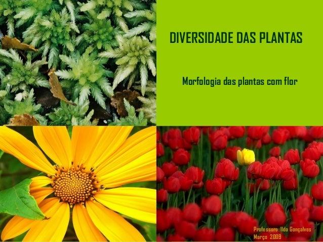 Morfologia das plantas com flor DIVERSIDADE DAS PLANTAS Professora: Ilda Gonçalves Março 2009