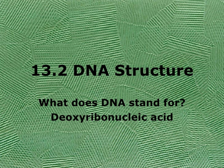 13.2 DNA Structure What does DNA stand for? Deoxyribonucleic acid