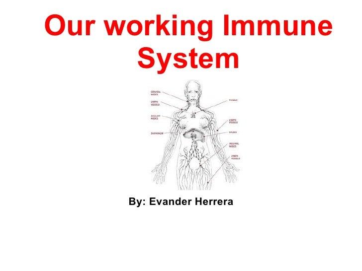 Our working Immune      System     By: Evander Herrera