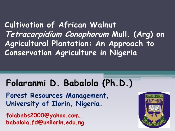 Cultivation of African WalnutTetracarpidium Conophorum Mull. (Arg) onAgricultural Plantation: An Approach toConservation A...