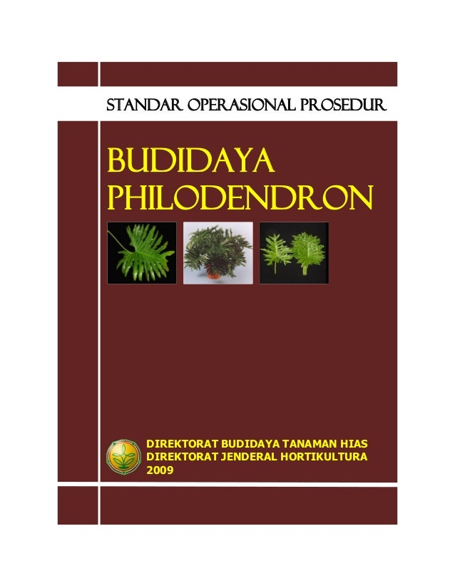 STANDAR OPERASIONAL PROSEDUR BUDIDAYA PHILODENDRON DIREKTORAT BUDIDAYA TANAMAN HIAS DIREKTORAT JENDERAL HORTIKULTURA 2009