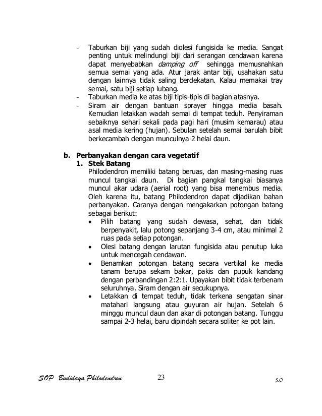 SOP Budidaya Philodendron S.O - Taburkan biji yang sudah diolesi fungisida ke media. Sangat penting untuk melindungi biji ...