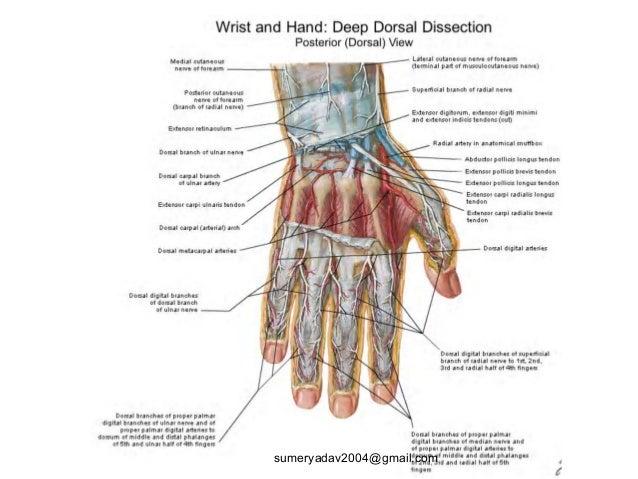 Extensor Tendons Injury And Deformity