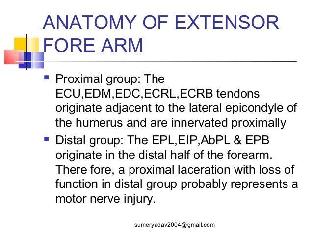 extensor tendons injury and deformity Slide 2