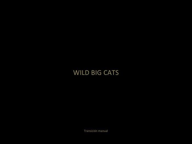 WILD BIG CATS Transición manual