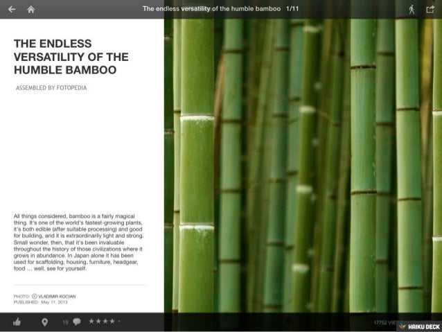 The Endless Versatility of the Humble Bamboo