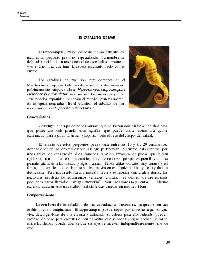 5º Básico Semestre I EL CABALLITO DE MAR El hippocampus, mejor conocido como caballito de mar, es un pequeño pez muy espec...