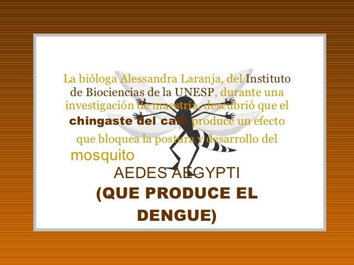 La bióloga Alessandra Laranja, del  Instituto de Biociencias de la UNESP , durante una investigación de maestría, descubri...