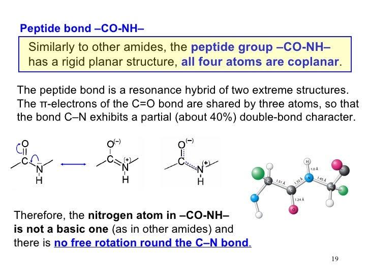 13 amino acids__peptides