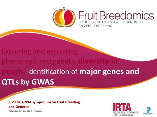 YOUR LOGO Exploring and exploiting phenotypic and genetic diversity in peach: identification of major genes and QTLs by GW...