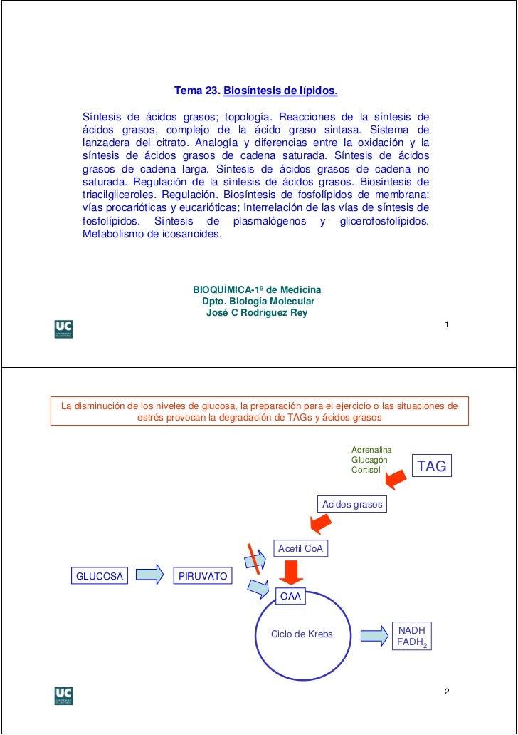 Tema 23. Biosíntesis de lípidos.     Síntesis de ácidos grasos; topología. Reacciones de la síntesis de     ácidos grasos,...