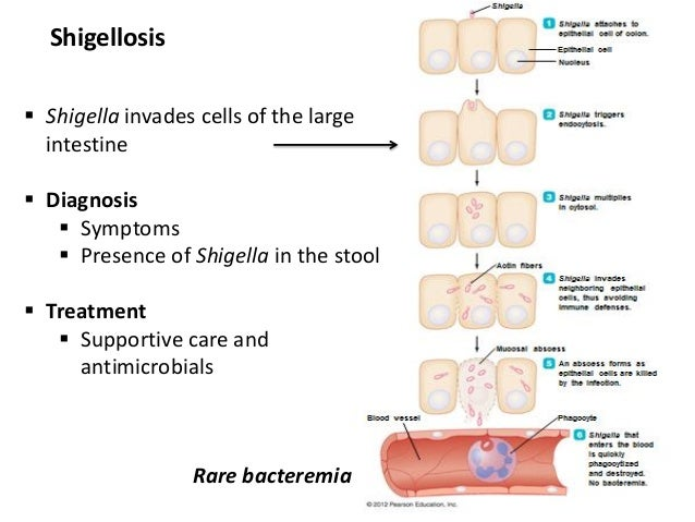 13 bio265 disease of gastrointestinal, urogenital systems ...