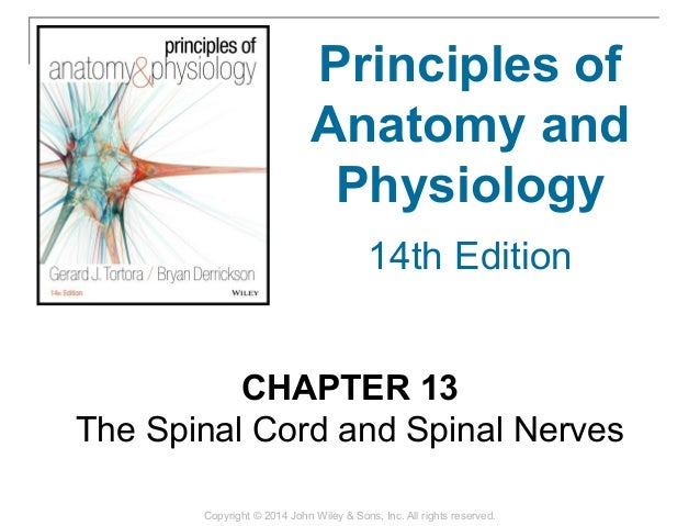 13 [chapter 13 the spinal cord and spinal nerves]