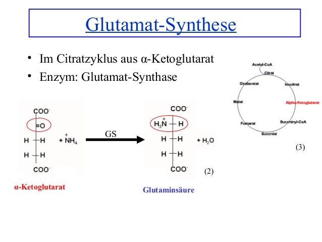 glutamat wirkung