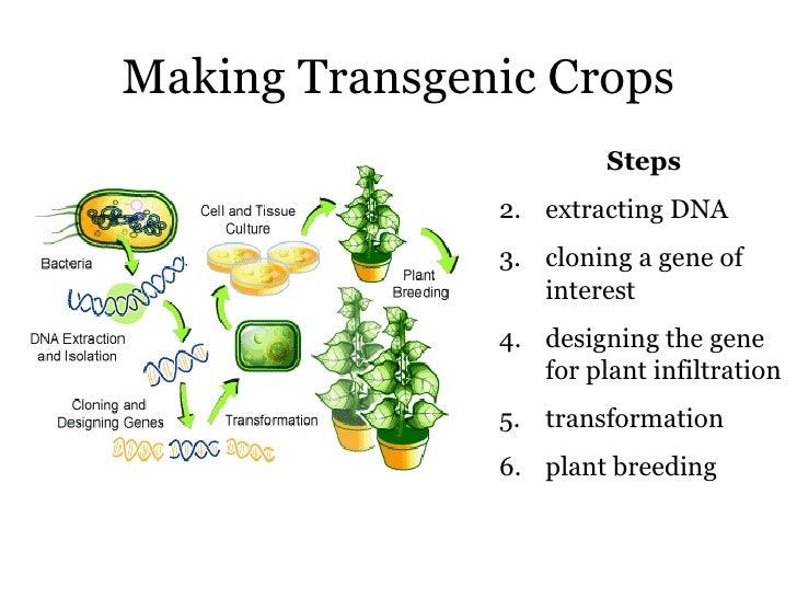Transgenic Plants Examples | www.pixshark.com - Images ...