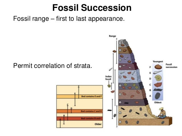 principals of fossil succession essay Older fossils are found in the lower layers, revealing the succession of organisms over time weathering has exposed the unifying principle of common descent that emerges from all the foregoing lines of evidence is being reinforced by the discoveries of modern biochemistry and molecular biology the code used to.