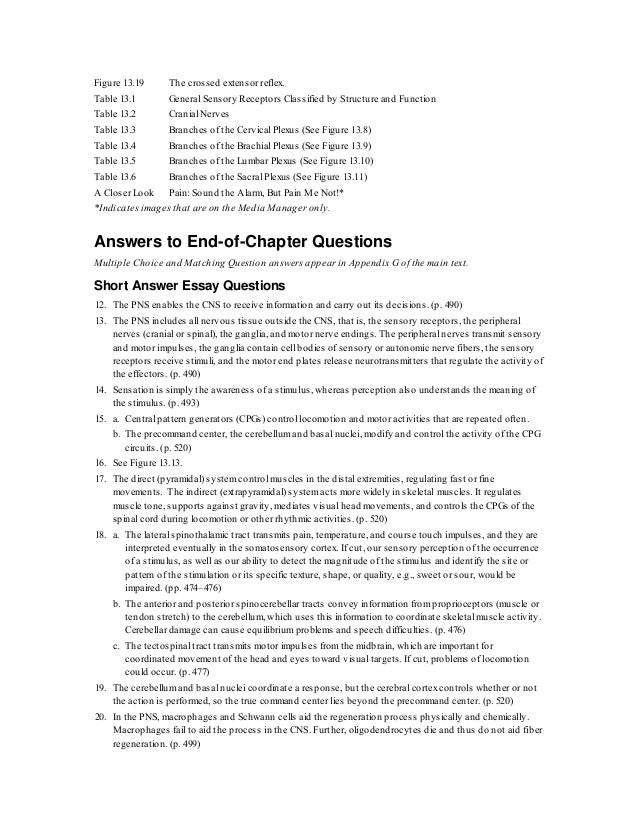Perfect Review Sheet 13 Neuron Anatomy And Physiology Answers ...