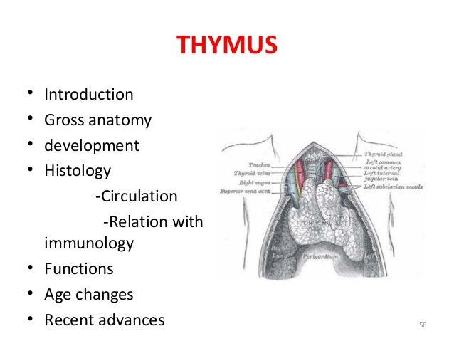 Thymus Anatomy, General Embryology Lecture I Sanjaya Adikari ...
