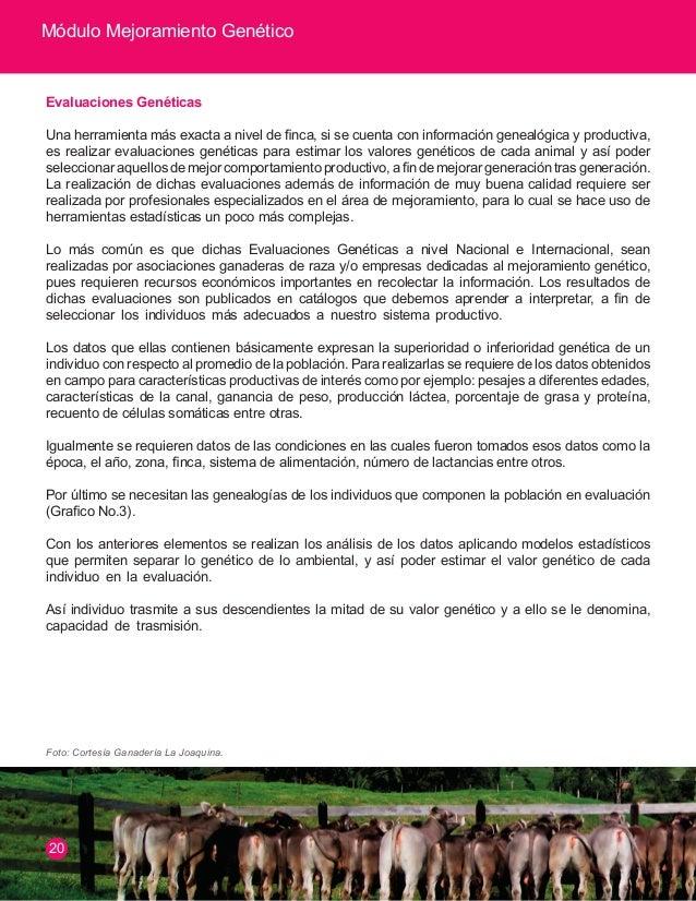 Módulo Mejoramiento Genético  Grafico 3. Esquema de Evaluación Genética  ANÁLISIS INFORMACIÓN  MODELOS ESTADÍSTICOS  BASE ...