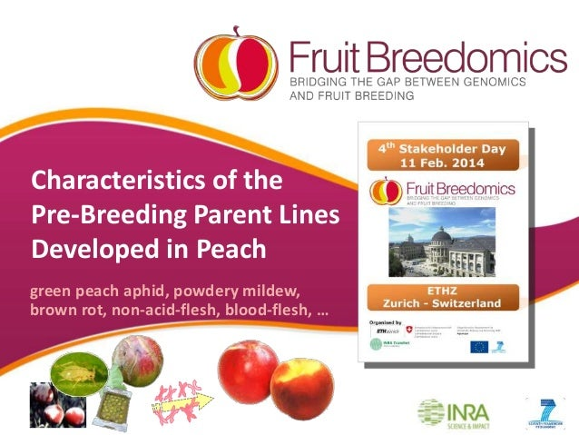Characteristics of the Pre-Breeding Parent Lines Developed in Peach green peach aphid, powdery mildew, brown rot, non-acid...