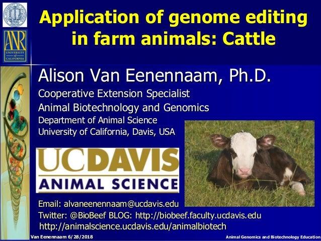 Animal Genomics and Biotechnology Education Application of genome editing in farm animals: Cattle Alison Van Eenennaam, Ph...