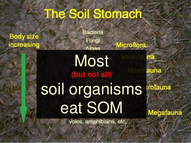 Understanding soil organic matter for Soil organisms