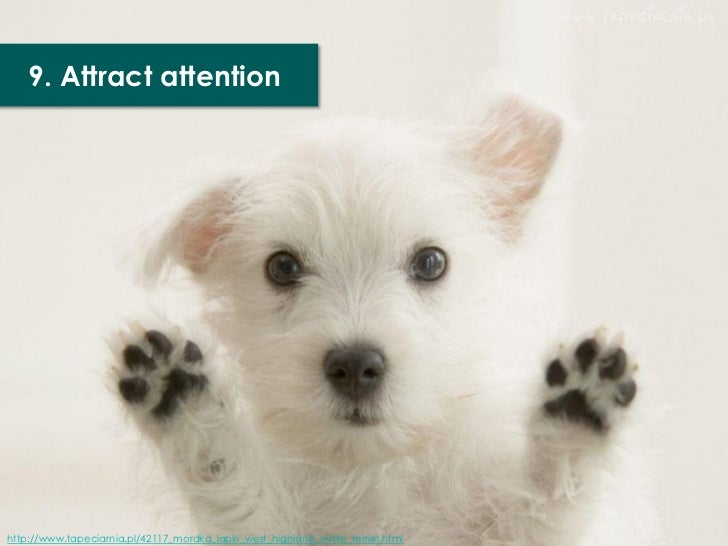 9. Attract attentionhttp://www.tapeciarnia.pl/42117_mordka_lapki_west_highland_white_terrier.html
