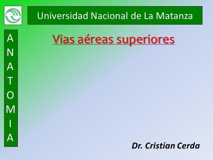 Universidad Nacional de La MatanzaA      Vias aéreas superioresNATOMIA                        Dr. Cristian Cerda