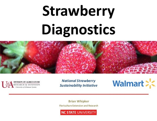 Strawberry Diagnostics NC STATE UNIVERSITY Brian Whipker Floriculture Extension and Research National Strawberry Sustainab...