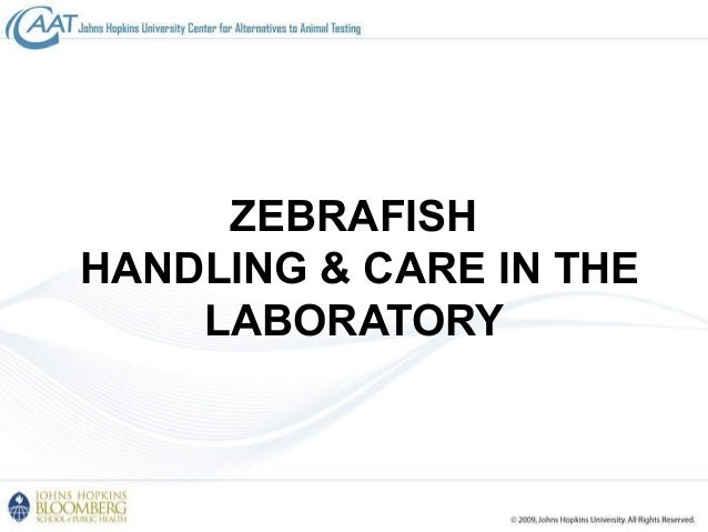 Introduction to alternatives to animal testing in toxicology