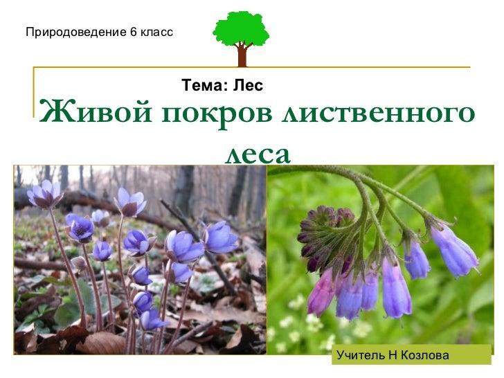 Живой покров лиственного леса Природоведение 6 класс Тема: Лес Учитель Н Козлова