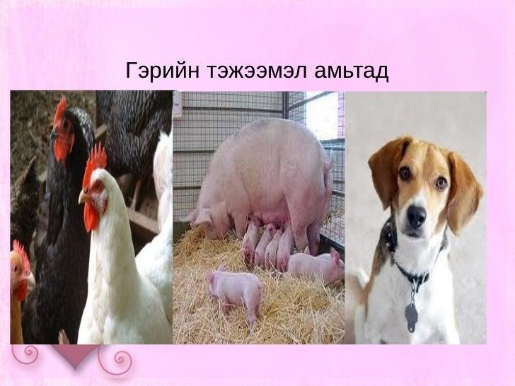 Гэрийн тэжээмэл амьтад