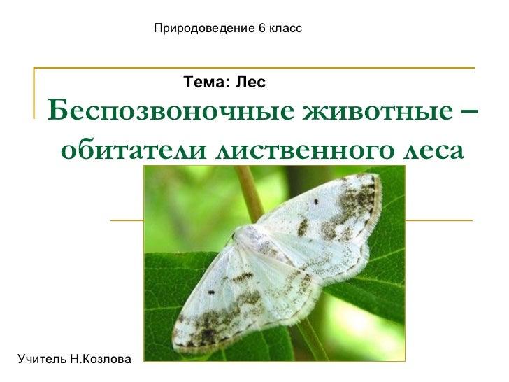 Беспозвоночные животные – обитатели лиственного леса Природоведение 6 класс Тема: Лес Учитель Н.Козлова