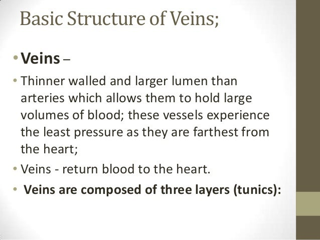 14 structure  u0026 functions of capillaries  venules and veins