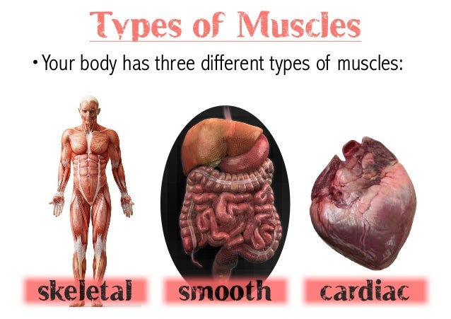 Integrated Units Of The Muscular System 67