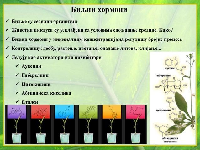 Биљни хормони  Биљке су сесилни организми  Животни циклуси су усклађени са условима спољашње средине. Како?  Биљни хорм...