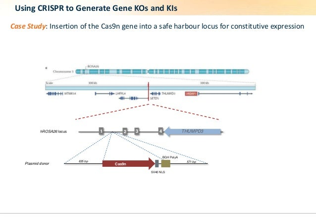 Using CRISPR to Generate Gene KOs and KIs  Case Study: Insertion of the Cas9n gene into a safe harbour locus for constitut...