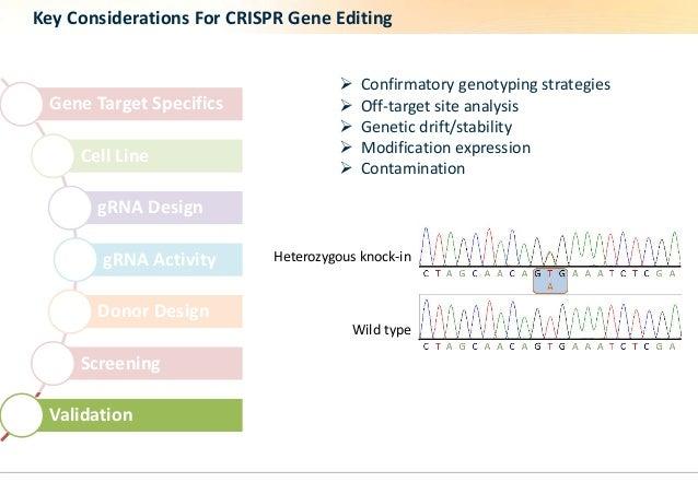 Key Considerations For CRISPR Gene Editing  Gene Target Specifics  Cell Line  gRNA Design  gRNA Activity  Donor Design  Sc...