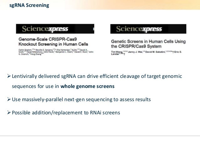 sgRNA Screening  Lentivirally delivered sgRNA can drive efficient cleavage of target genomic  sequences for use in whole ...