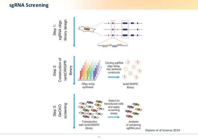 32  sgRNA Screening  Shalem et al Science 2014